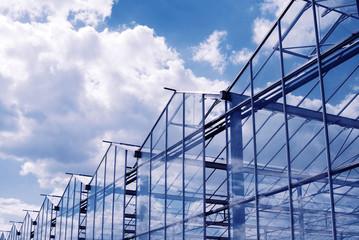 Fototapeta greenhouse in Hungary and summer sky obraz