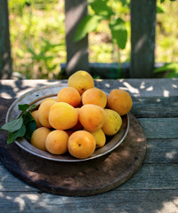 Fresh apricots in metal plate on table outdoor
