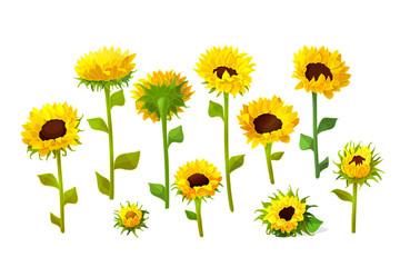 vector sunflower flower set