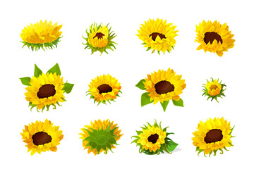 vector sunflower seeds head flower set Fototapete