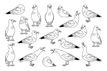 vector seagull sea gull set