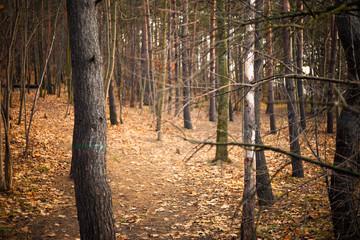 Jesienne zdjęcie lasu