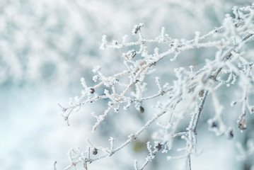 Beautiful Christmas landscape. The branches of the tree are covered with hoarfrost, snowfall, natural image, soft focus, macro.
