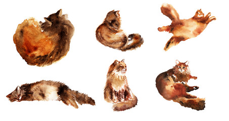 Watercolor hand drawn element set of fluffy cat in different poses: lazy, lying, dreaming, sleeping isolated on a white background