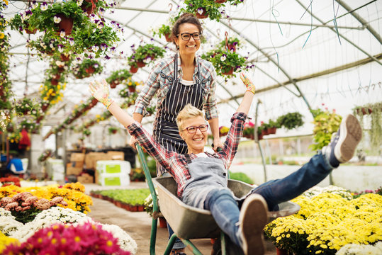 Two female florists having fun in greenhouse. One woman pushing other in wheelbarrow. All around potted flowers.