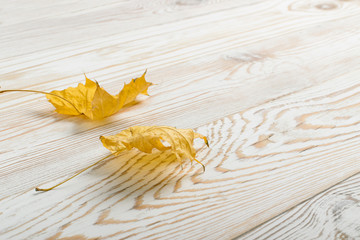 Beautiful Dry Maple Leaf on White Wooden Background