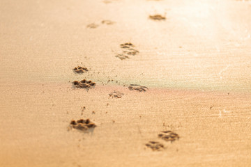 Dog pawprints in sand