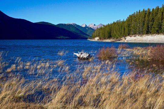 Marshy shore of mountain lake
