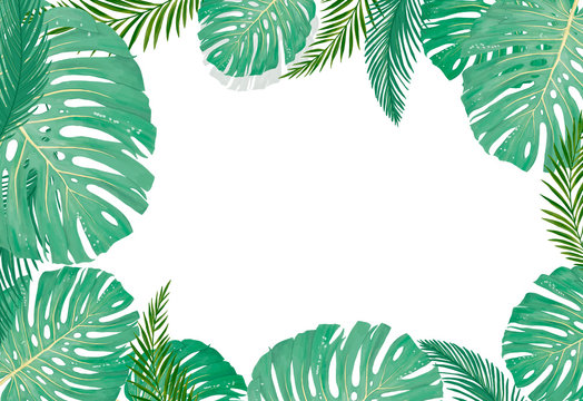 tropical botanical plants, background with leaves of coconut and banana design card jungle leaf on white background