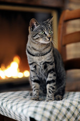 Close-up of tabby cat looking away while sitting on chair against fireplace at home