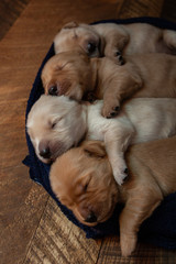 High angle view of cute puppies sleeping in row on pet bed at home