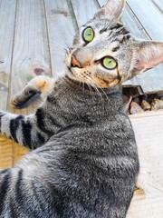 Gato olhos verdes