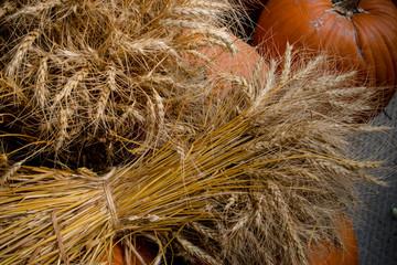 pumpkin wheat