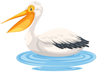 A pelican on water