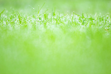 Rain drops on the grass and bokeh green background.