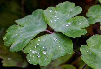 Wet Green forest floor leaves growing