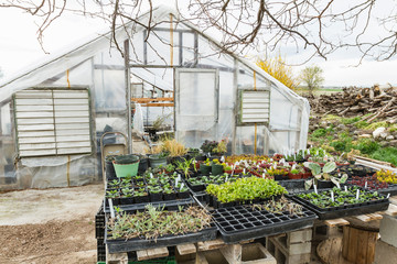 Various plants growing by greenhouse against sky