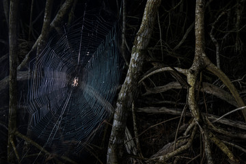 Close-up of spider weaving web amidst branches in forest at Everglades National Park during night