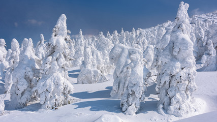 Yamagata frozen forest with snow monsters (frozen trees called juhyo)