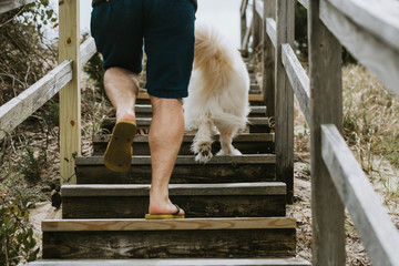 Low section of man with dog moving up on steps