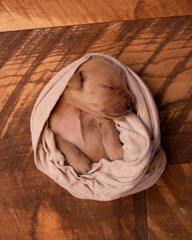 High angle view of cute puppy sleeping on blanket at home