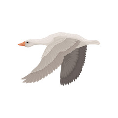 Large gray goose in flying action, side view. Wild bird with long neck. Ornithology theme. Flat vector icon