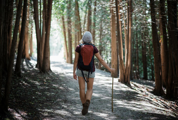 Rear view of female hiker with backpack standing on road amidst trees in forest
