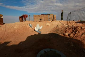 A bird flies next to a PMF fighter near the Iraqi-Syrian border at al-Qaim, Iraq.