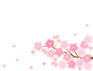 さくら16 桜