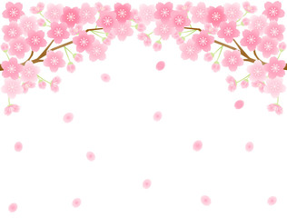 さくら19 桜