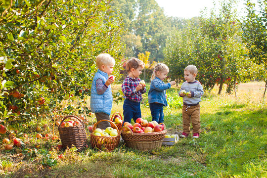 Group of small kids eating apples at the tree orchard