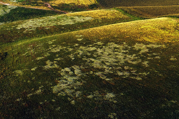 aerial drone view with sunflower textured field in summer season