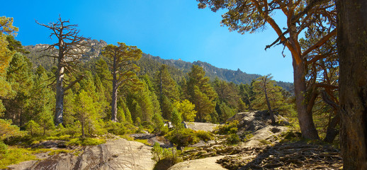 Panoramic view of a mountain forest