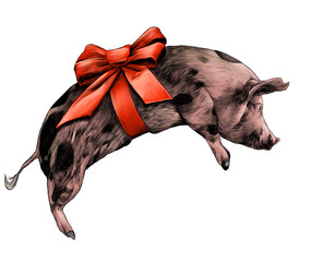 Christmas pig with bow on torso lying on side sketch vector graphic color illustration on white background