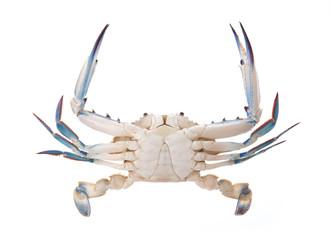 fresh crab isolated on white background.