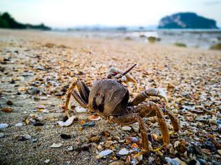 Ghost crab walking on the beach , Koh Yao Yai island