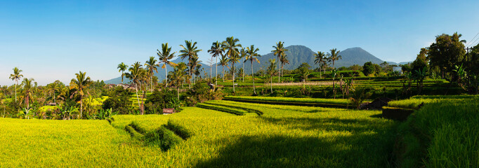 Printed kitchen splashbacks Bali Panoramic view of Rice Terraces and blue sky, Ubud, Bali, Indonesia. Beautiful green young rice fields, natural beautiful tropical background. Rice farm, field, paddy. Travel concept.