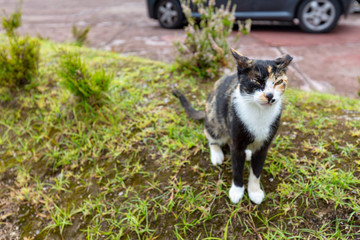 One of the many cats that chill out at the Fumarolas da Lagoa das Furnas in Sao Miguel.
