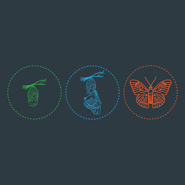 Butterfly and metamorphosis period vector drawing