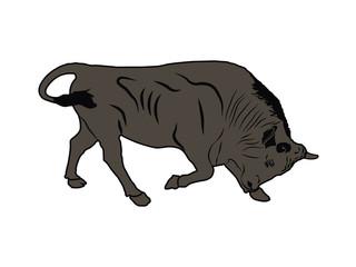 Illustration of adult bull