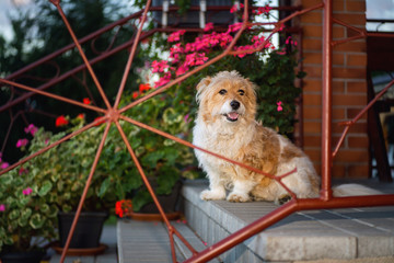 Beautiful dog sitting on concrete stairs