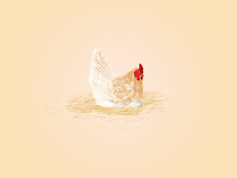 white chicken, eggs, hay vector illustration