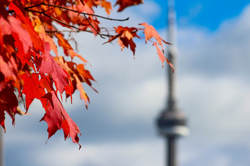 CN Tower Autumn