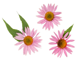 Echinacea flowers isolated on white, top view