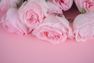 bouqet delicate pink roses on pink background