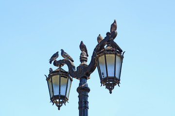 Group of Pigeons Relaxing on the Gorgeous Vintage Style Street Lamps, Santiago, Chile