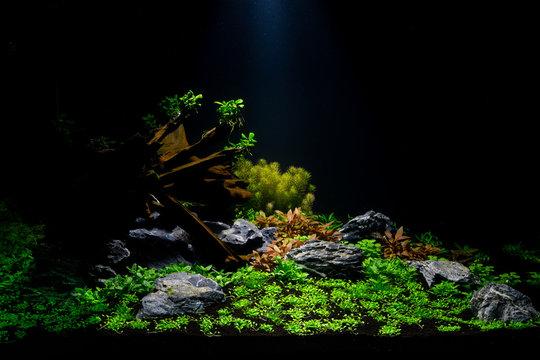 Aquascape 02