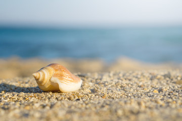Shell on sand at the beach. Blue sea on background