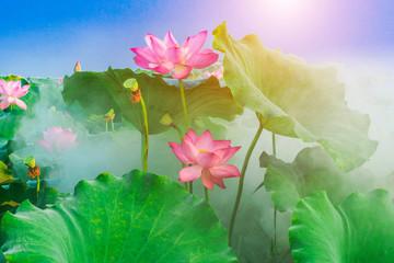Garden Poster Lotus flower lotus flower blossom