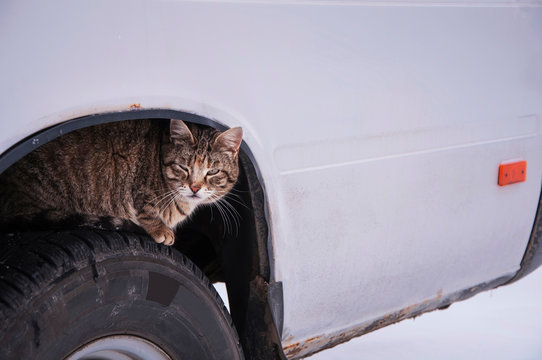 Stray street cat sits on car wheel. Homeless cat hiding looking for warmth in cold weather (life in danger concept)